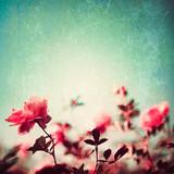 Fototapety Textured vintage rose garden