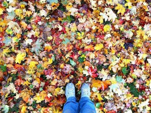 canvas print picture Mit Füssen im Laub stehen, Herbst, bunte Blätter