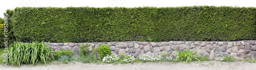 Very long green fence - 71952198