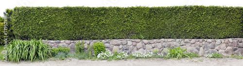 Papiers peints Jardin Very long green fence