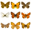canvas print picture - Butterfly set