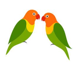 Parrot. Lovebird