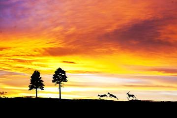 la montaña de las cabras saltarinas