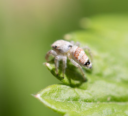 spider in nature. macro