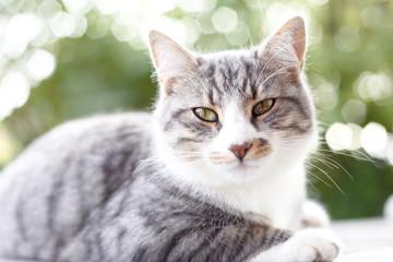 Katzenporträt mit Gegenlicht