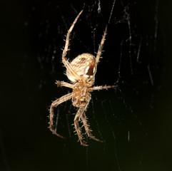 spider. Super Macro