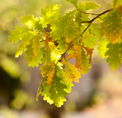 autumn leaves on a tree in nature
