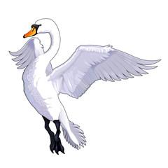Flying swan.