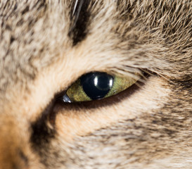 cat eye. close-up