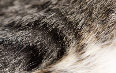 animal fur as background