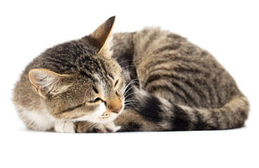 cat sleeps on the white background