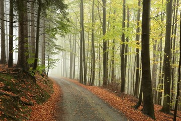Picturesque autumnal forest in the mist