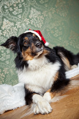 Hundeschule zu Weihnachten
