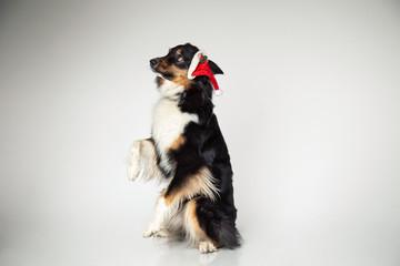 Hund bekommt Ärger