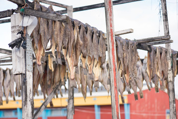 Greenland halibut drying on a wooden rack