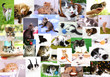 canvas print picture - Collage of pretty cats