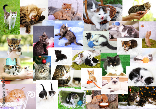 canvas print picture Collage of pretty cats