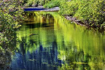 Summer Colors Green Reflection Wenatchee River Washington