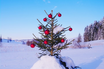 Christmas tree in winter landscape