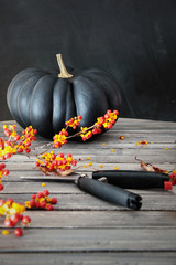 Black colored pumpkin with berries and scissors