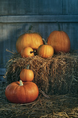Assortment of pumpkins on hay