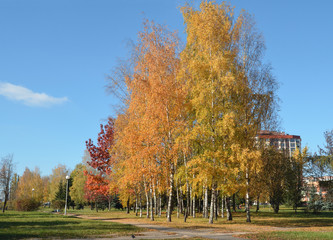 autumn view in Minsk