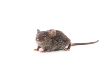 Small mouse