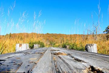 青空と紅葉の中の木道