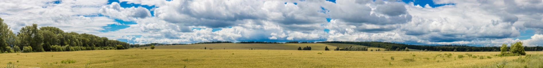 A wheat field, fresh crop of wheat