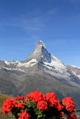 Matterhorn in summer, with red flowers