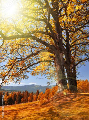 Panel Szklany Autumn landscape in the national park Sumava - Czech Republic