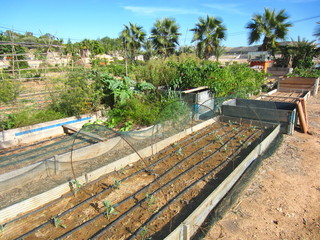 allotment with drip irrigation