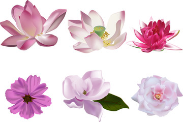 six pink flowers collection