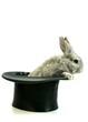 canvas print picture - Kaninchen aus den Hut zaubern, freigestellt