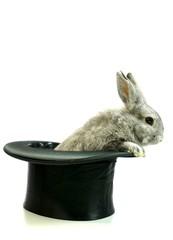 Kaninchen aus den Hut zaubern, freigestellt