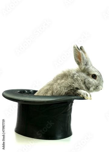 canvas print picture Kaninchen aus den Hut zaubern, freigestellt