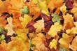 canvas print picture - Blätterhintergrund