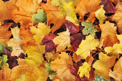 canvas print picture Blätterhintergrund