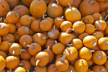 Polish Autumn pumpkins