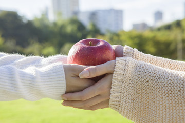 The hands of two women and apples