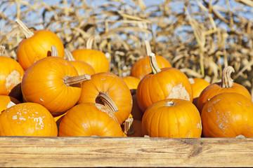 Polish Autumn pumpkins