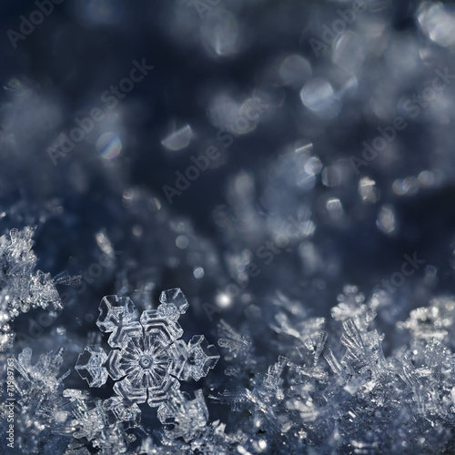 Foto op Canvas Water planten Christmas Snowflake