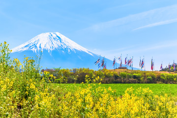 Mount Fuji with colorful carp banners and canola flower field