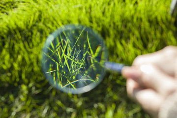 How you have observed in the magnifying glass