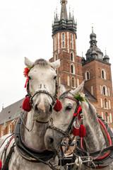 Pferde in Krakau