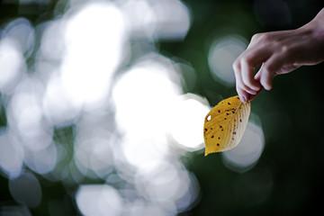숨겨둔 노란잎 편지
