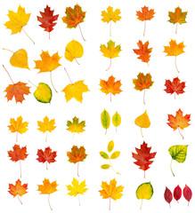 Big autumn leaves set