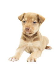 doggy on a white background isolated