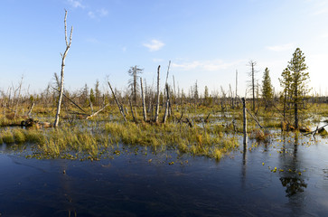 Scenic autumn landscape swamps in northern Russia