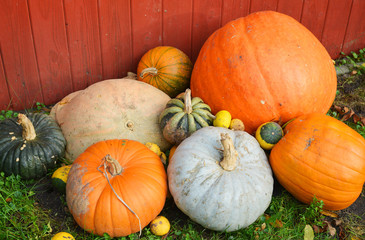 Pumkins Harvest Autumn